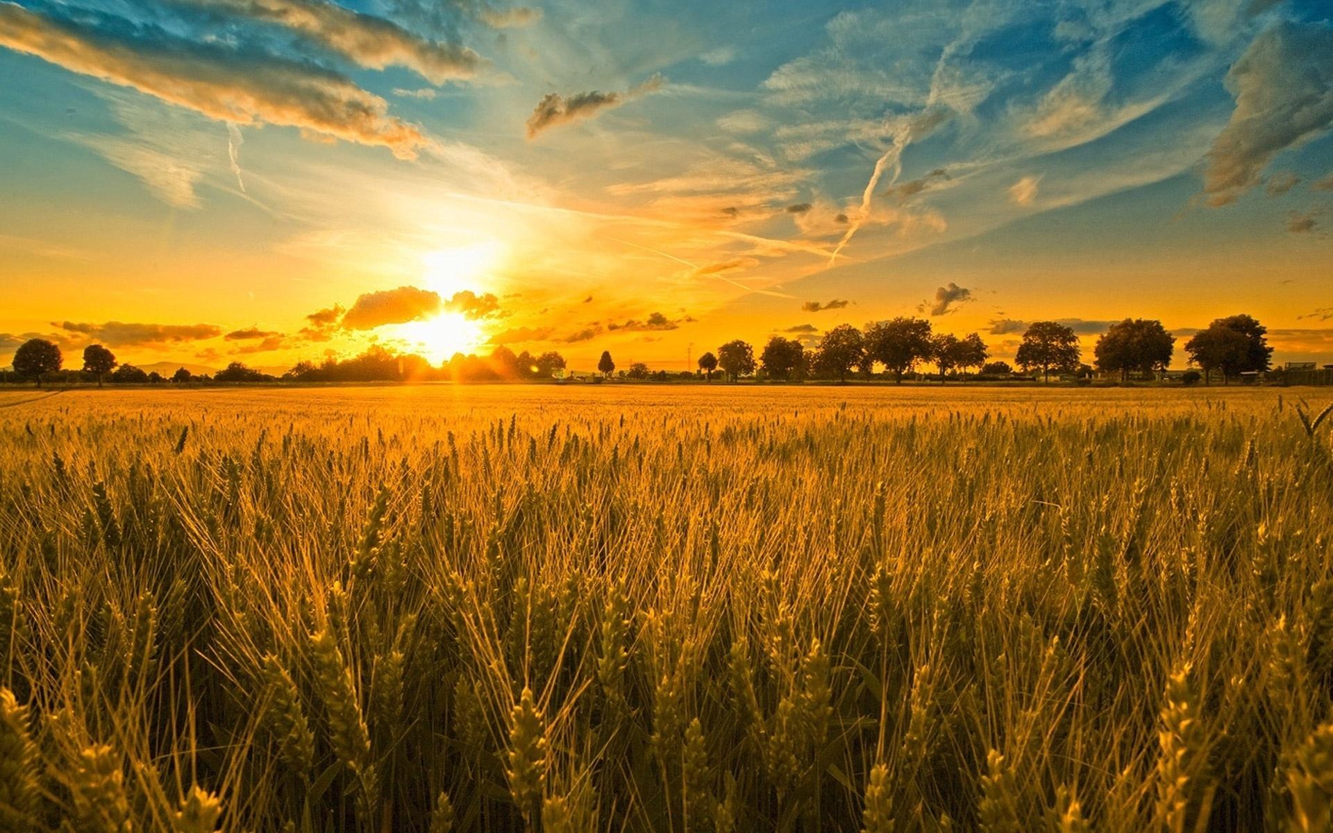 Otkupne cijene merkatilne pšenice – ROD 2021.